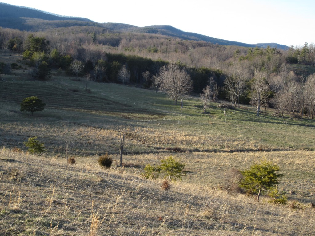 Compost on the pasture!