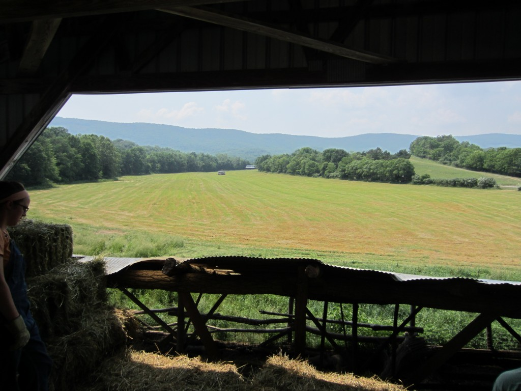 The view from the hay barn during my summer, 2011.