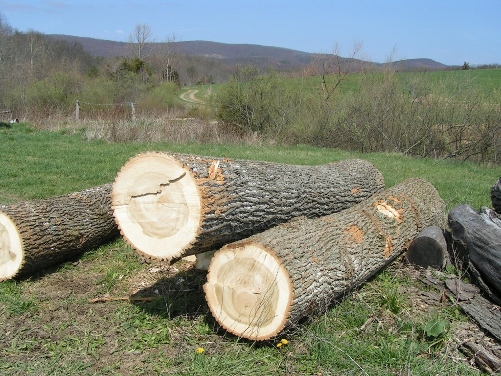 Logs to be milled